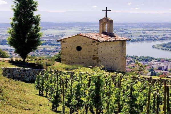 О винах из долины Рона