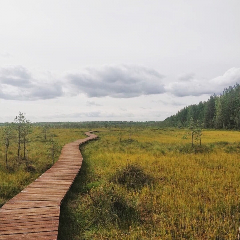 Заказник Сестрорецкое болото или куда отправиться на выходных