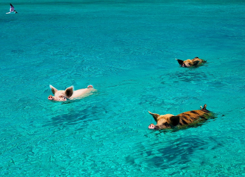 Big Major Cay - Bahamas resorts
