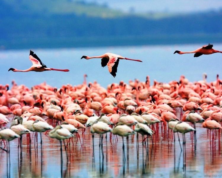 Натрон - Танзания Курорты