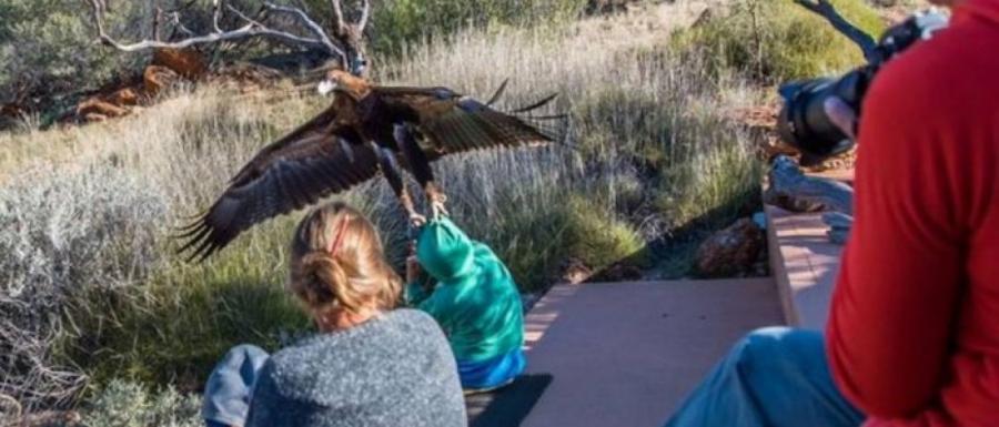 Орел попытался утащить мальчика в Австралии