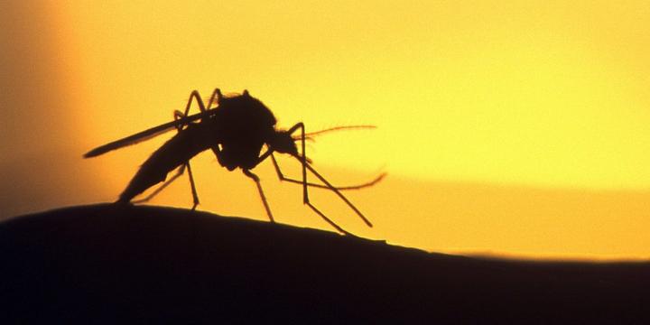 В Швеции прошел чемпионат по ловле комаров