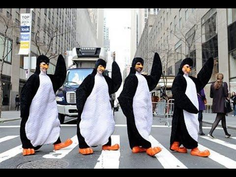 В Новой Зеландии построили путепровод для пингвинов