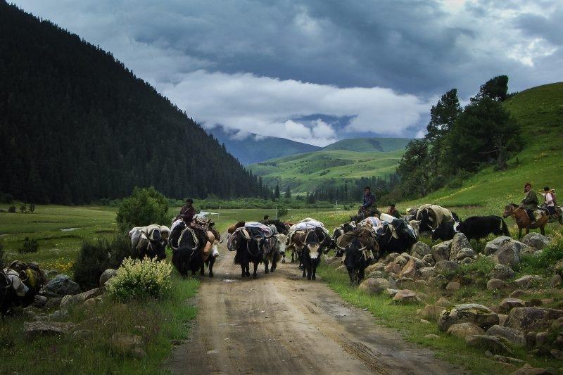 Знакомство с пастухами и ночь в старинном замке в Словении