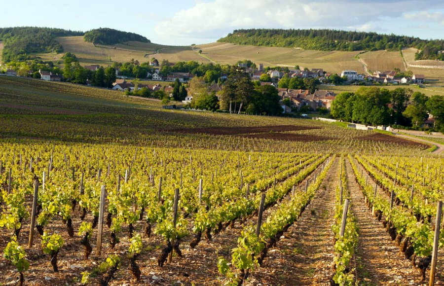 Burgundy - France regions