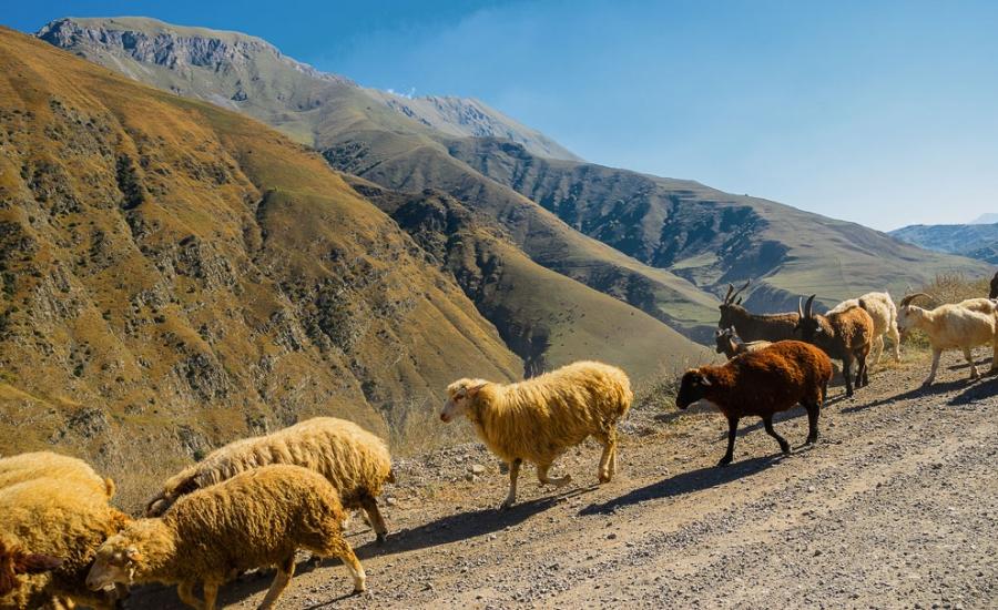 Северная Осетия - Алания - Россия Регионы