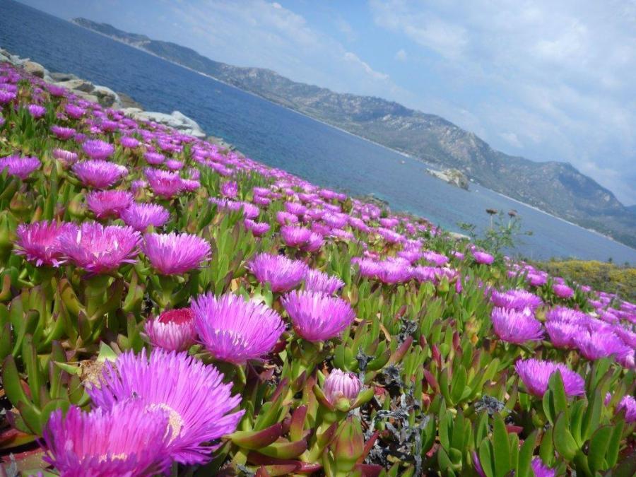 Sardegna - Italy regions