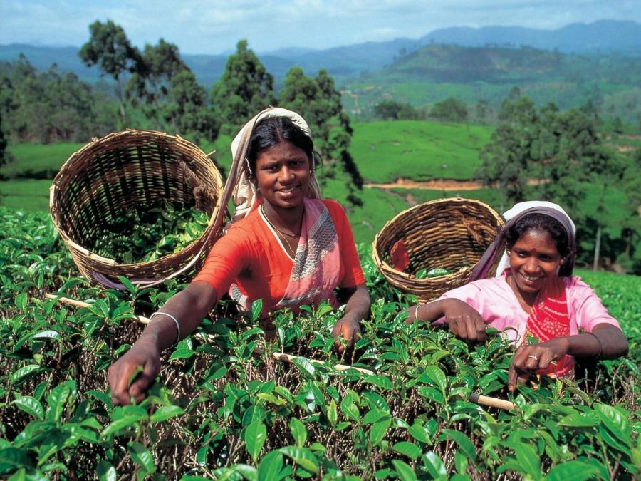 Министр туризма Шри-Ланки: страна готова снижать цены на туры для возвращения туристов