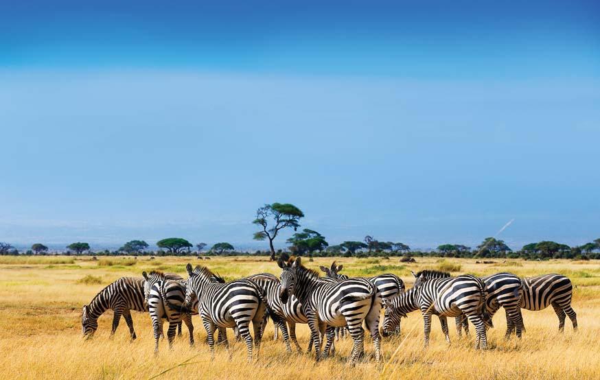 Эксперты рассказали, когда туристы смогут полететь чартерами в Танзанию